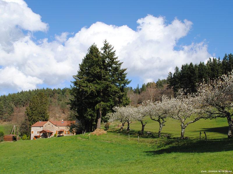 spring1-2014