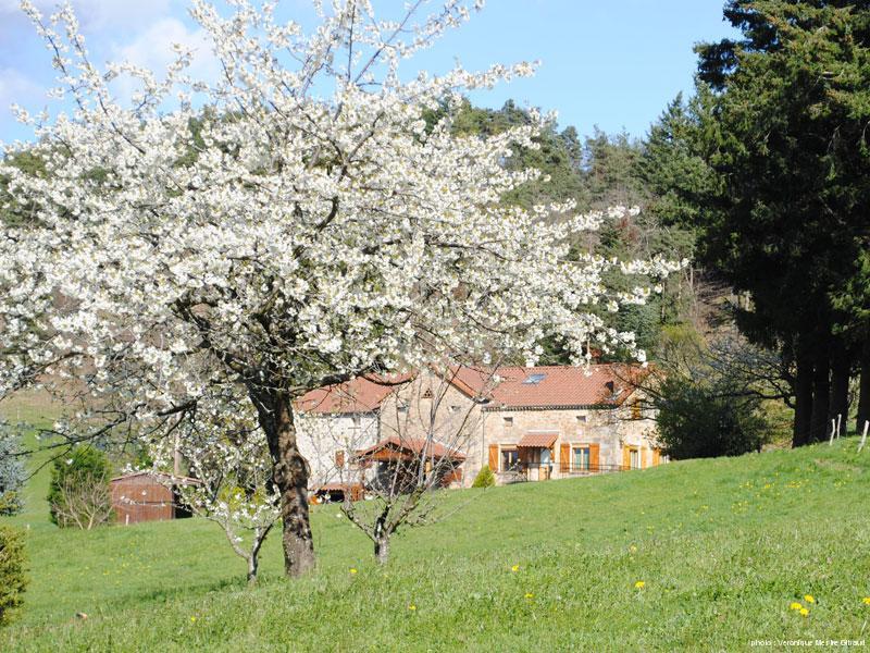 spring2-2014
