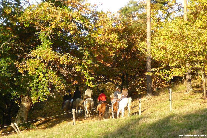 automne à Pâturage