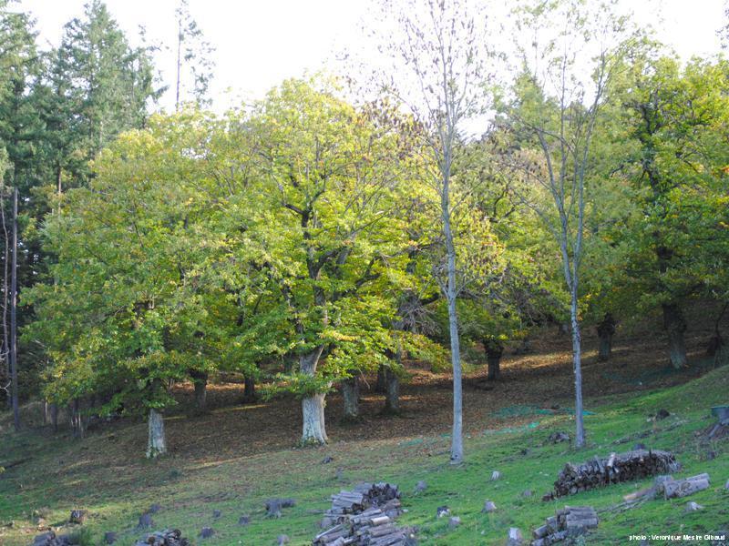 automne2013-1
