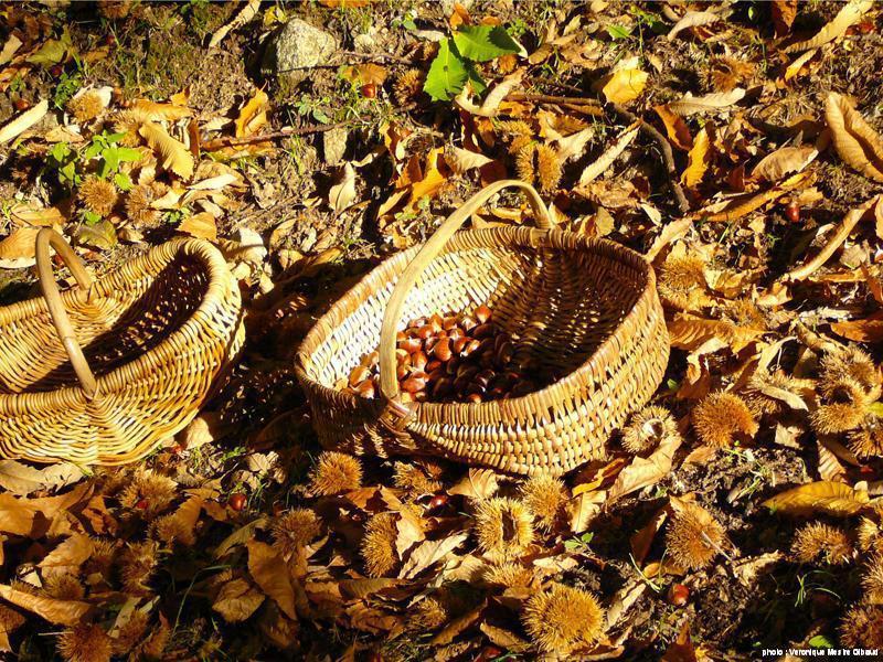 châtaignes de Pâturage en automne