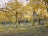 châtaigneraie de Pâturage en automne