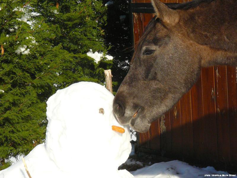cheval gourmand